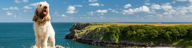 Dog friendly holidays There's no need to leave your beloved dog at home when you holiday in Pembrokeshire. We have a great selection of pet friendly cottages in fabulous locations so you are sure to find the perfect holiday home for you and your dog right here in Pembrokeshire. There are plenty of beautiful dog friendly beaches to enjoy,