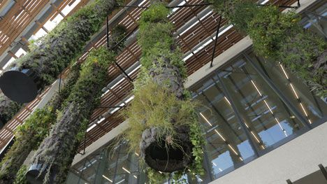 French botanist Patrick Blanc, the inventor of green walls, explains how he created the hanging gardens on the outside of Herzog & de Meuron's  new Pérez Art Museum in our next movie from Miami.