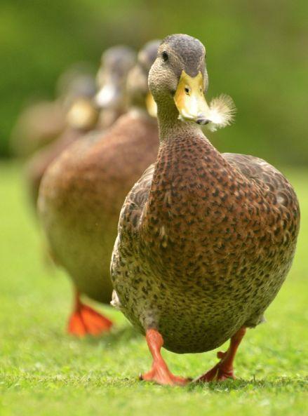 in a row  {Daz/Swan}