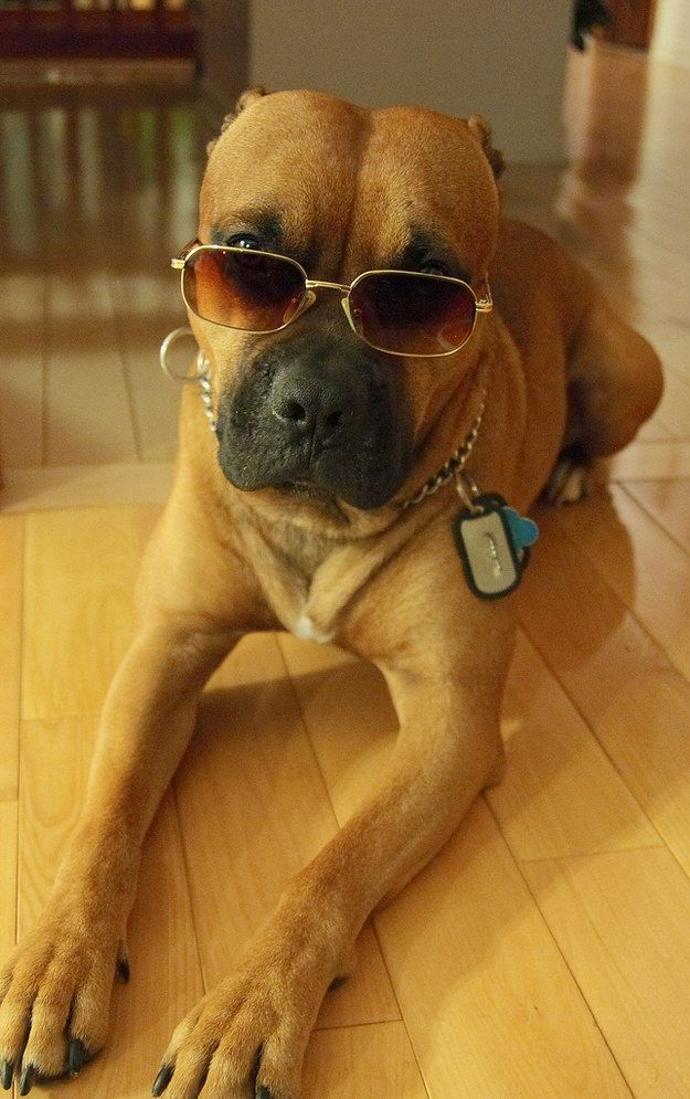 They'll make you look way too uncool by comparison: | 24 Reasons Why No One Should Ever Have A Pit Bull As A Pet