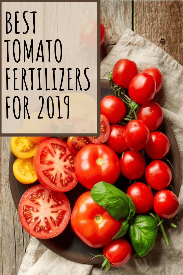 Best Tomato Fertilizers 2020 Products And Buying Guide 400 x 300