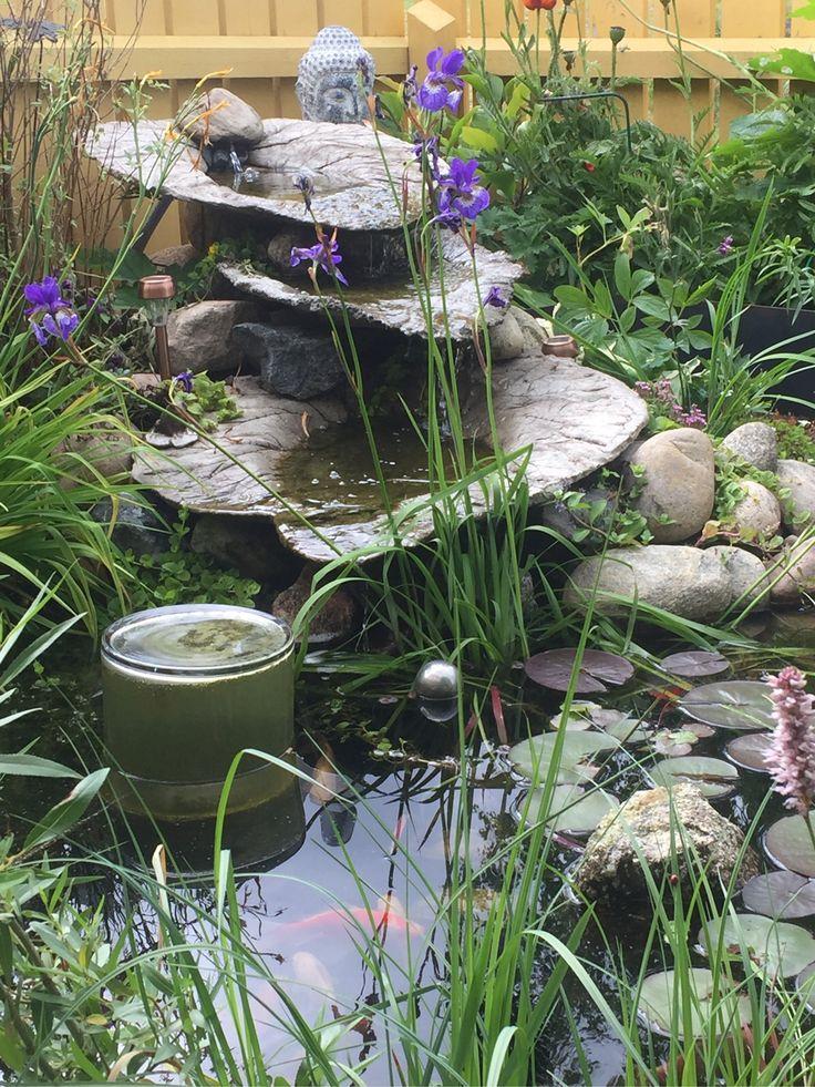 Gjuta rabarberblad till blivande vattenfall