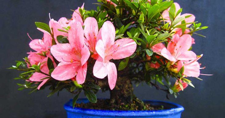 10 φυτά εσωτερικού χώρου που θα καθαρίσουν το αέρα του σπιτιού σας καλύτερα από οποιαδήποτε συσκευή | Official.gr