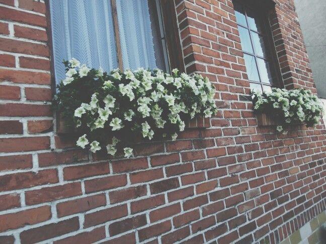 piękny dom,piękne kwiaty||beautiful house,beautiful flowers Poland is beautiful (sometimes).
