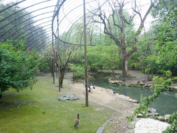 Jardin des plantes aviary interior building aviaries - Zoo jardin des plantes ...
