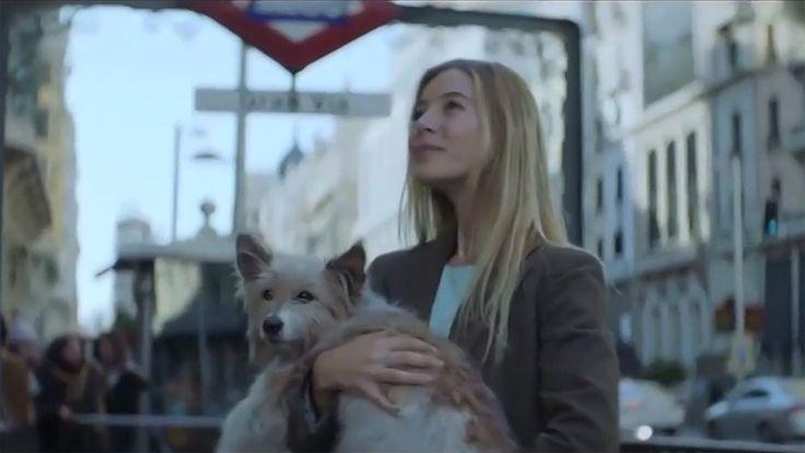 La otra historia del perro del anuncio de la Loteria de Navidad 2017, Telediario  - RTVE.es A la Carta