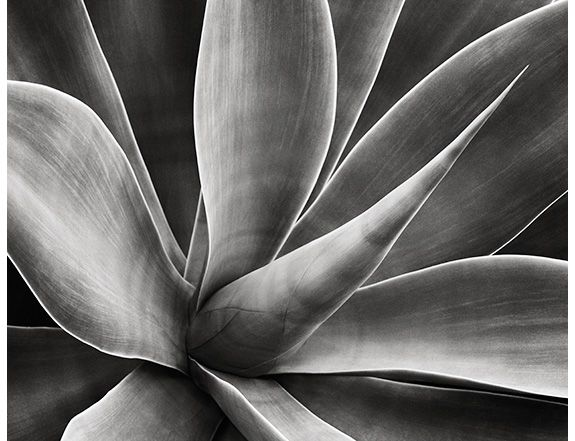 photograph by Jan Bell - Grand Prize Winning Photo - Agave - Ansel Adams Gallery