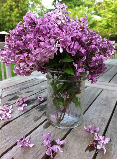 When I was young I would pick lilacs for my mom every day they were in bloom :)