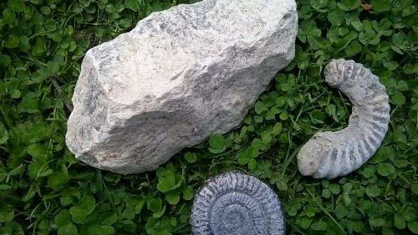 Fossils just like these were discovered here at College Lake. Catherine (BBOWT)