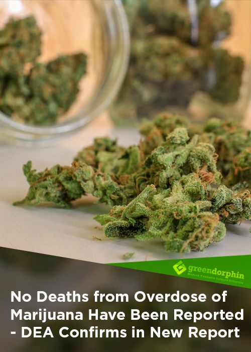 "The DEA (Drug Enforcement Administration) recently published its Drug of Abuse 2017 report that poses the following question at the section about cannabis (or marijuana as the DEA calls it): ""What are its overdose effects?"" The answer is simply: ""No deaths from overdose of marijuana have been reported."" It is encouraging to see that the DEA remains truthful in its report, in this case, however, it raises the question why it decided to keep cannabis a Schedule I drug late last year."