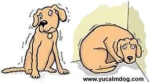 Dog Noise Anxiety http://www.yucalmdog.com