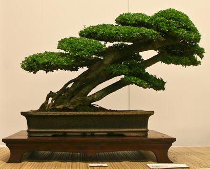 Bonsai… The Art of Bonsai Project - World Bonsai Convention 2009 - A Photo Essay