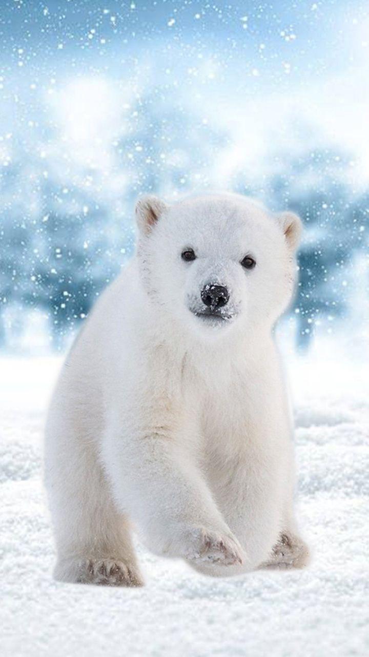 Hello! Ice bear. Save the Polar Bears. Winter (With