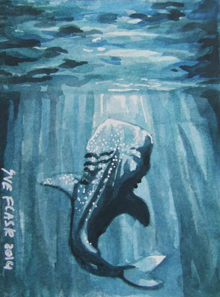 NFAC Nibblefest - Whale Shark - 2014 by Sue Flask Original  ACEO Sea Monster