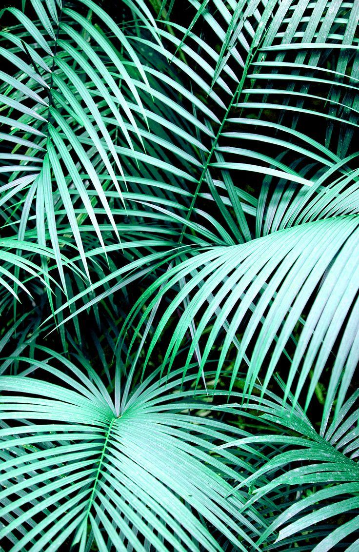 Motif #palmes