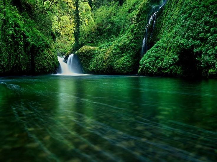 Beautiful Green Water Surrounded By The Rich Green