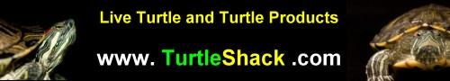 Tortoise Shack!