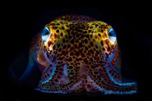 Este artista tomá fotos de todo tipo de animales incluyendo animales  microscópicos y le gusta explorar en todo tipo de lugares para encontrar especies que son muy poco vistas.