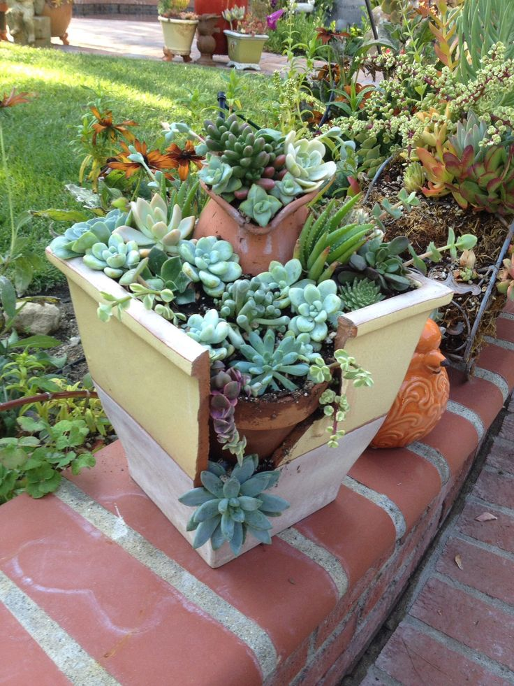repurposed broken pot with succulents