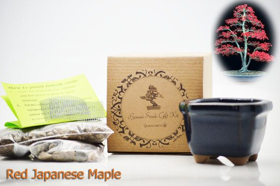 9GreenBox  Red Japanese Maple Bonsai Seed Kit Gift  by 9GreenBox, $14.99