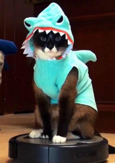 Sharkcat!--has anyone else noticed that the sharkcat is riding a Roomba vacuum??? LOL!!