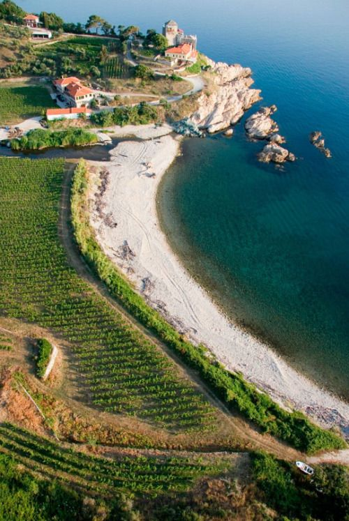 Vineyards of Mount Athos, MacedoniaGreece