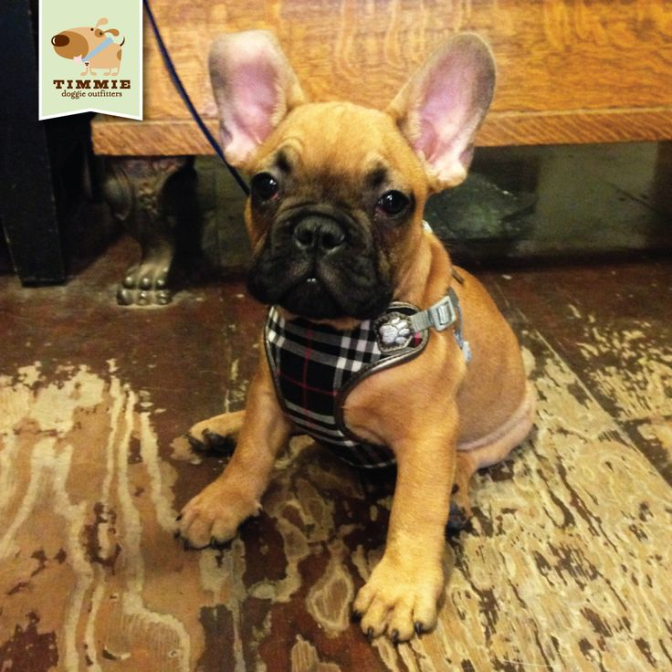 Pretty Paw Dog Harness - WIRE Center •