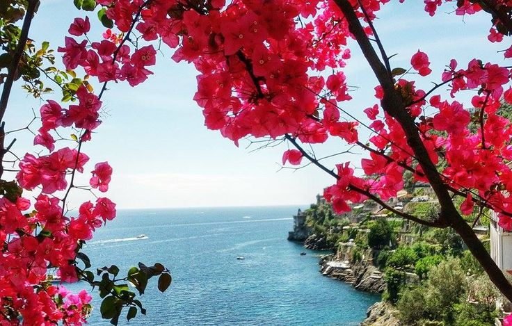 Bougainvillea flowers, the typical plant of the Amalfi Coast, admire the amazing colors of the coastline from one of our yacht.   Web Site: www.amalfisails.com E-Mail: info@amalfisails.it