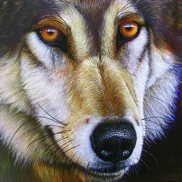 Save the Wolf Painting by Jurek Zamoyski - Save the Wolf Fine Art Prints and Posters for Sale