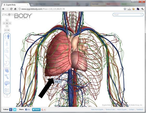 32 Best Anatomy Images On Pinterest The Human Body Human Anatomy