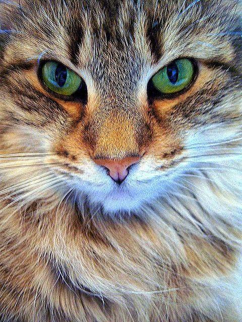 Os olhos que tudo vê: A IMPERATRIZ GANHA UM ADMIRADOR DE PESO: Sarney di...