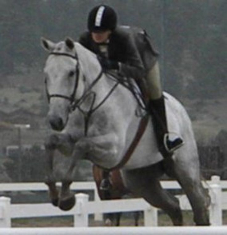 Two to Tango - Appendix Quarter Horse - Hunter Horse For Lease