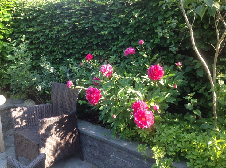 My garden at this moment in june!