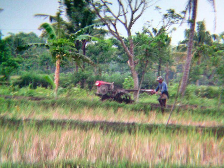 لا تتراجع #Tractor #handtractor #agriculture #farm