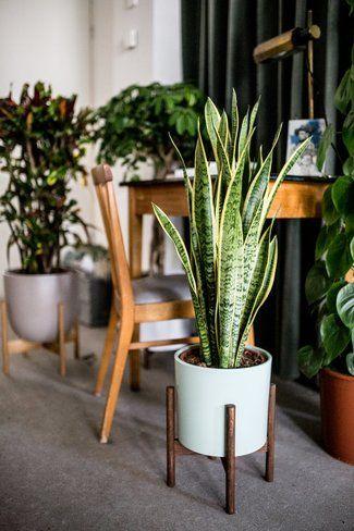 Sauerstoff Spendende Pflanzen Fürs Büro