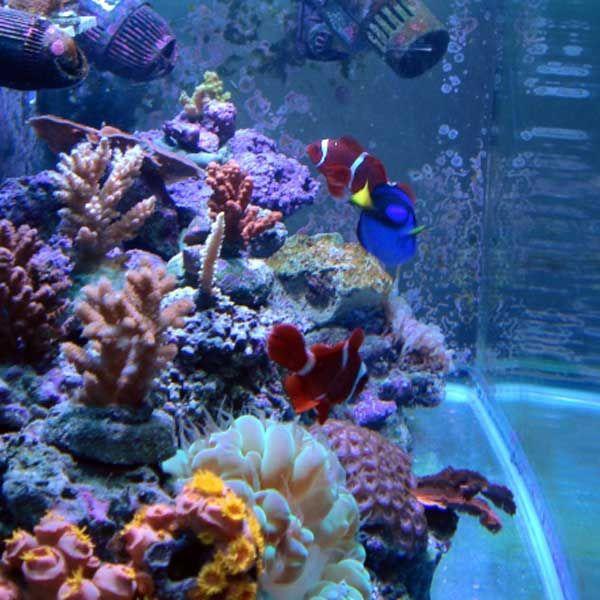 78 Best Fish Tanks Images On Pinterest Aquarium Ideas