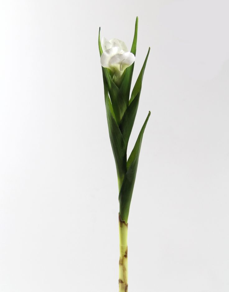 67 cm Single Beyaz Eire... http://www.dekorsende.com/p-5040-dal-demet-Single-Eire-Beyaz-2122120054133-.html