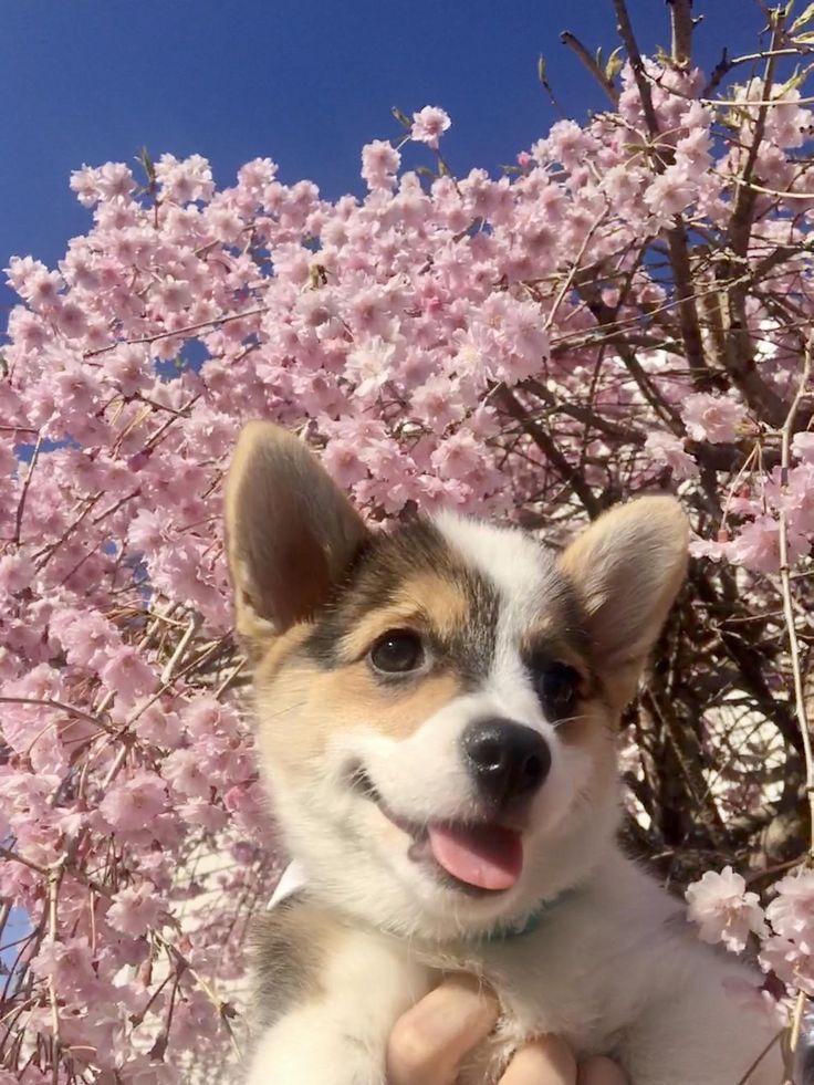 Spring has sprung edition! https//ift.tt/2ydDdf6 in
