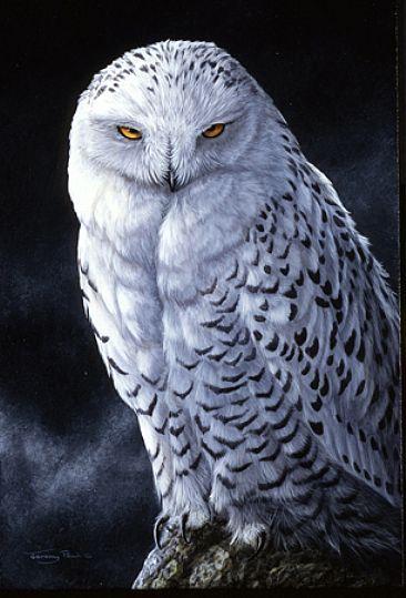 Snowy Owl - Painting Art by Jeremy Paul