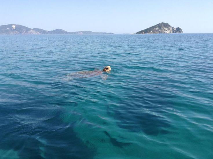 #barcaavela #vela #sailingboat #sailing #moana60 #imoca #cruise #crociere #baie #sup #greece #Zakynthos #kefallina #Ithaki #travel #vacanze #viaggi #estate #spiagge