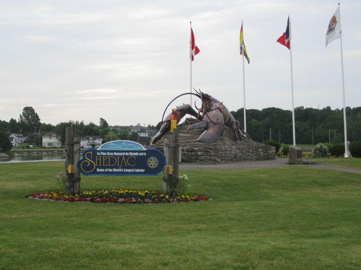 Le plus gros homard est à Shédiac!