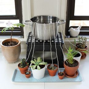 Don't let your houseplants suffer while you're away from home. Rig up this DIY self-watering wicking system / #watersystem #houseplants / Source: https://scissorsandsage.com/?s=wicking&submit=Search