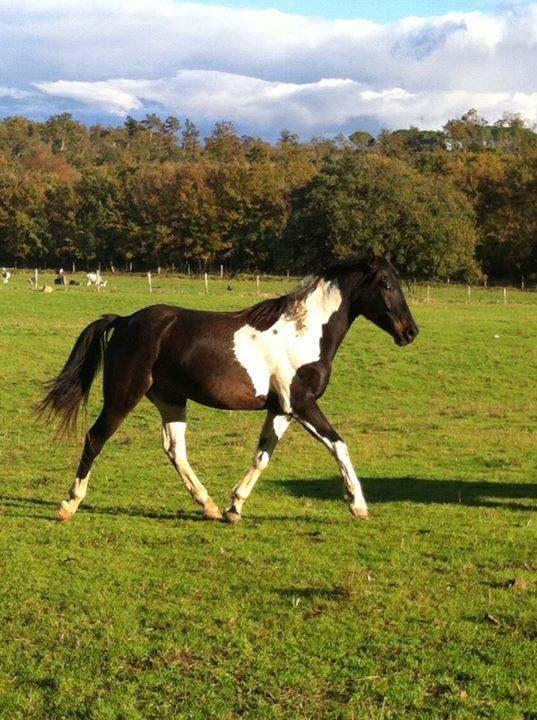 #cavalli #horse #chevaux #equitazione