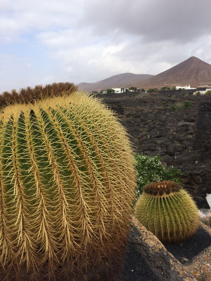 Cacti on Lanzarote