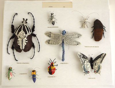 796 Best Images About Entomology Bugs Fact Amp Fiction On