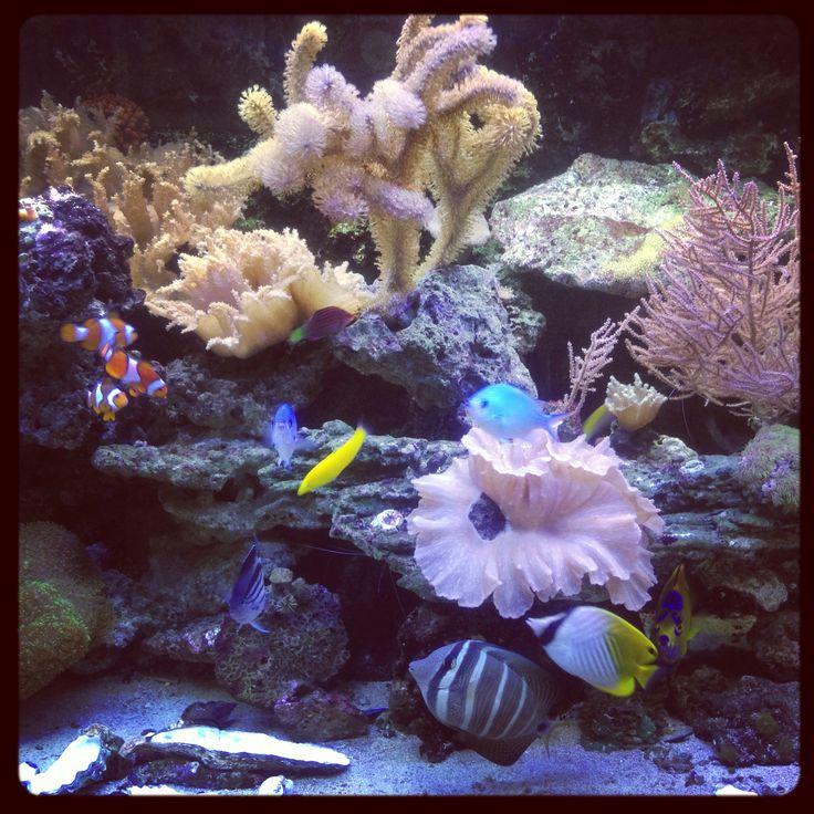 Our rif aquarium