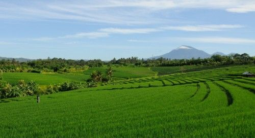 Luxury Villa Bulung Daya with Bali rice fields in the background