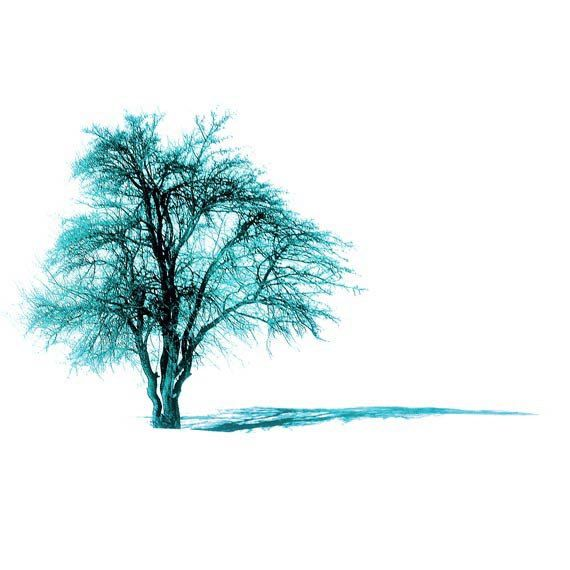 Tree photography Turquoise tree Nature photography Alone by gonulk, $30.00