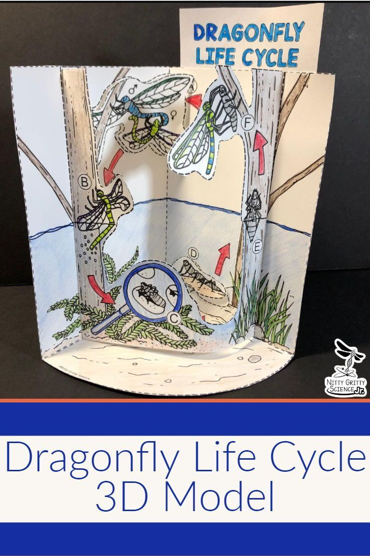 Dragonfly Life Cycle 3d Model Did You Know That When Your Students Are Developing And Using Models Dragonfly Life Cycle Life Cycles Life Science Experiments [ 1103 x 735 Pixel ]