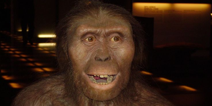 """Lucy"" (Australopithecus afarensis, 3.18 mya) was a transitional species between arboreal and ground-dwelling hominids... and may have died by falling from a tree."